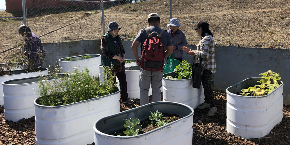 From Food Insecurity to Food Sovereignty: Reimagining local food systems in the Sunnydale community